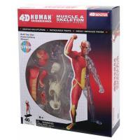 Пазл 4D Master Объемная анатомическая модель Мускулы и скелет чел Фото