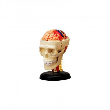 Пазл 4D Master Объемная анатомическая модель Черепно-мозговая кор Фото 1